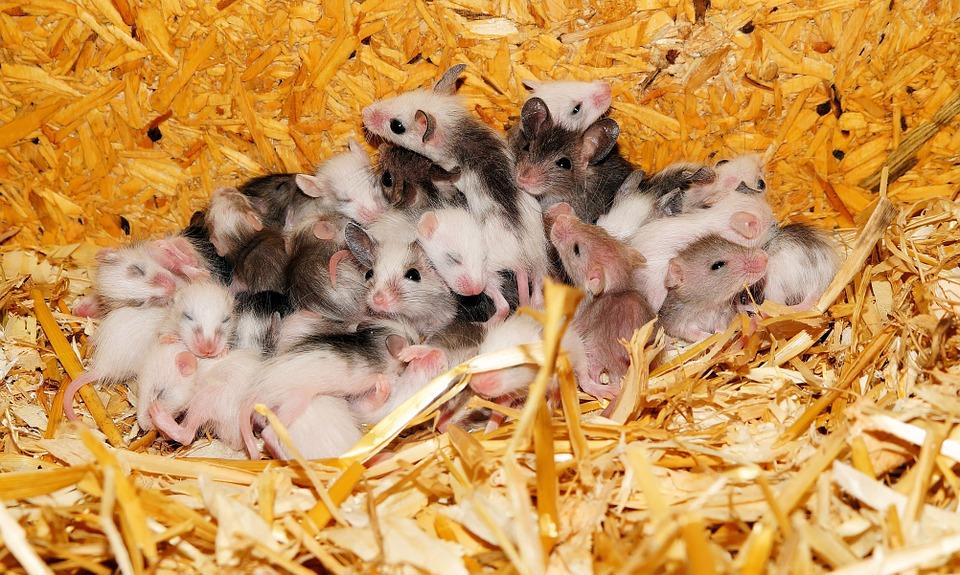 Mäusejunge-warten-auf-ein-Zuhause