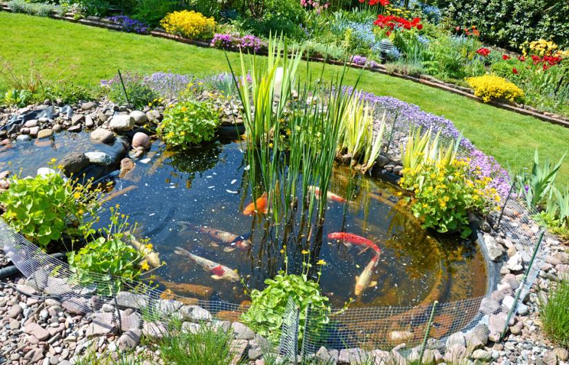 Ihr Garten - Ihre Fische - Ihr Gartenteich - schöner Leben mit Zoo Zöllner